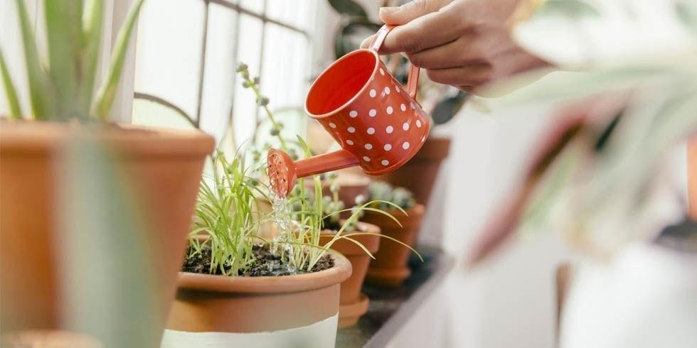 Поливать комнатное растение во сне