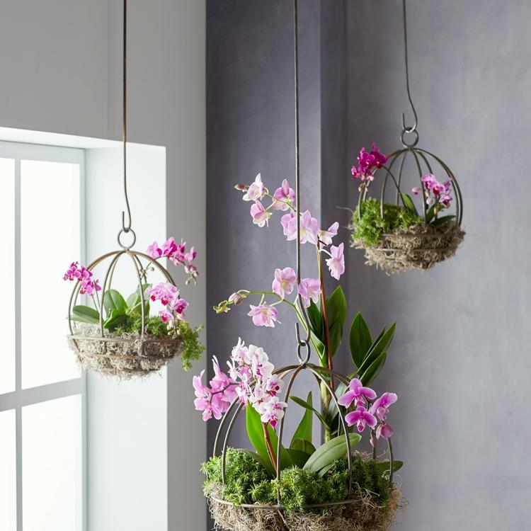 орхидеи в ящике на окне фото хочу