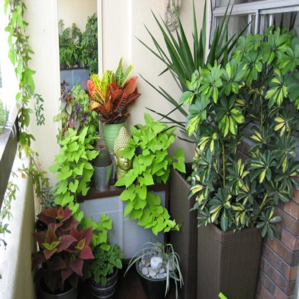 Простые идеи озеленения балкона.