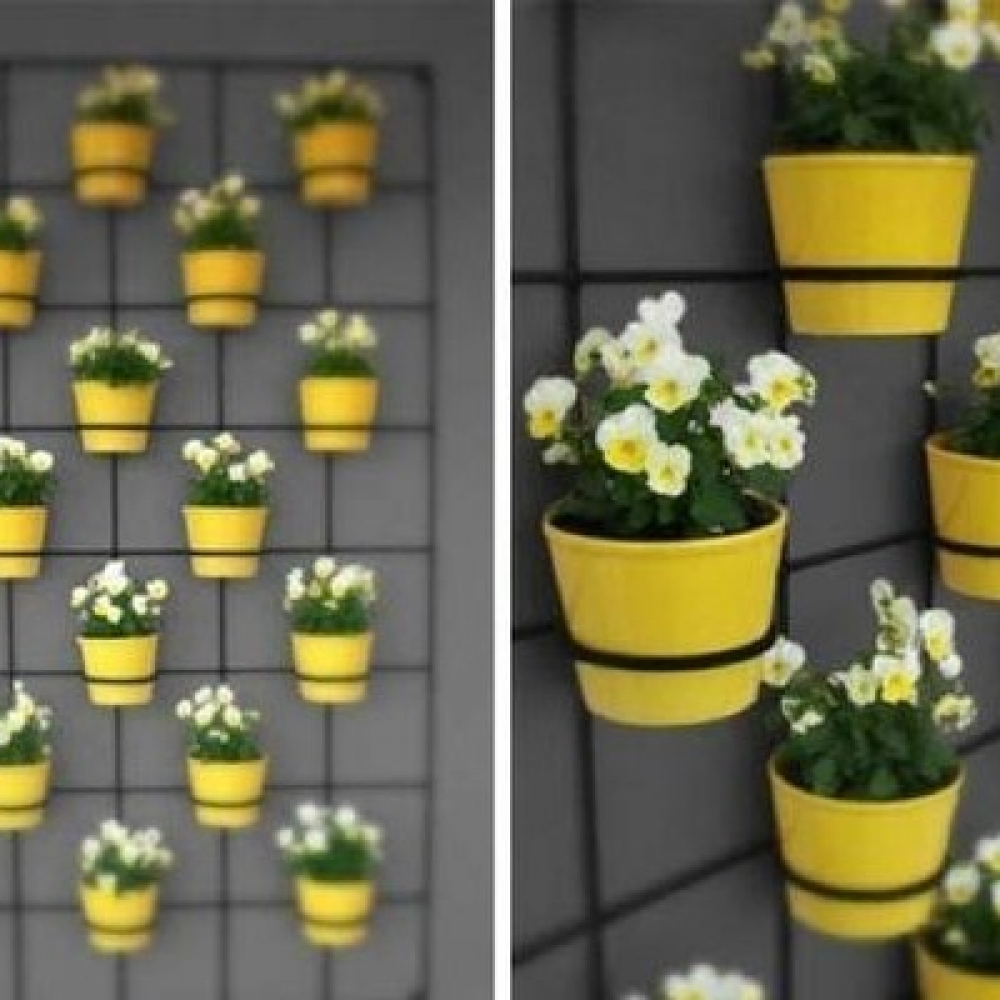 Home decor: 15 fantastic ideas for designing plant in pots.