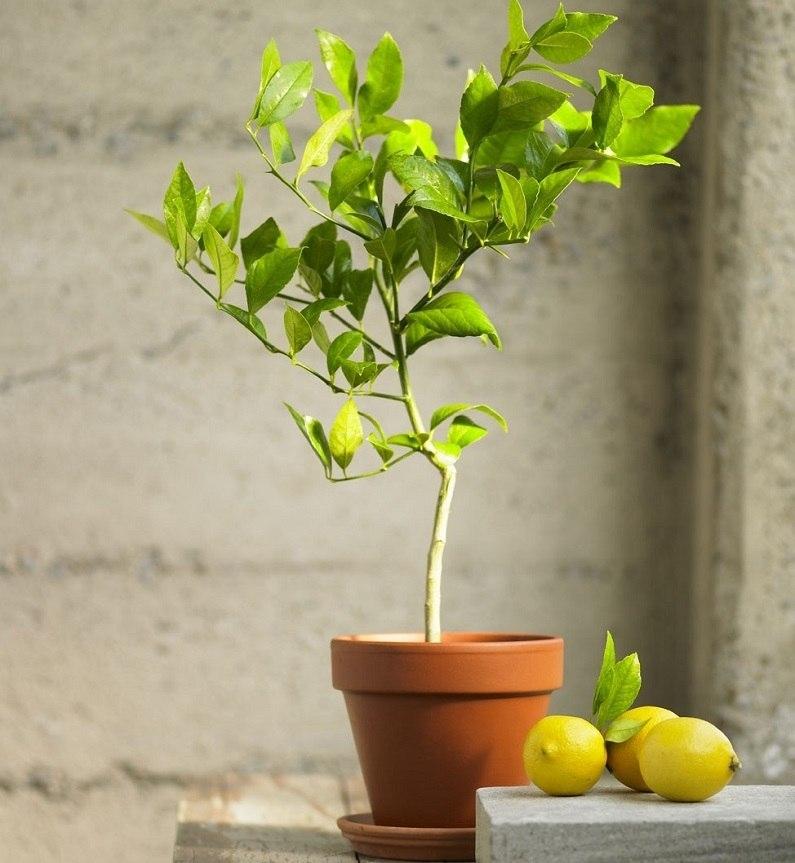7 наиболее популярных экзотических комнатных растений
